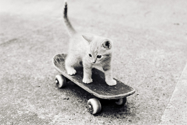 Cat_Skateboarding_Wheelbase_Magazine